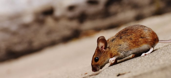 4 Things To Look For When You're Not Sure If You Have A Pest Outbreak
